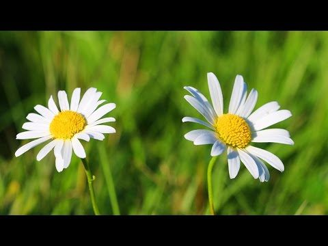 Relaxation mountains landscapes flowers water life. Relaxation music, ambiance…