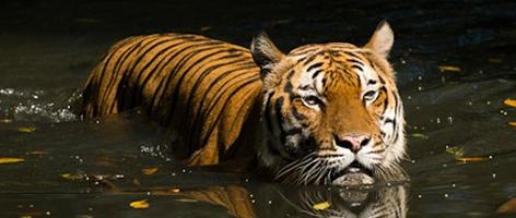 Opplevelsesrike India, rundreise med Lotus Travel.