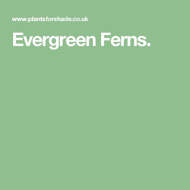 Evergreen Ferns.