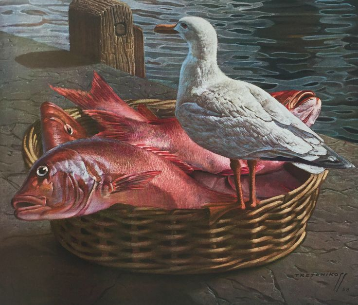 Tretchikoff's 'Not for the birds': The artists view of a Seagull and a basket of Red Roman fish which are always abundant at the Cape Town harbour. #Art #Artlovers #artist #Tretchikoff #Painting #Inspiration #notforthebirds #seagull #birds #redroman