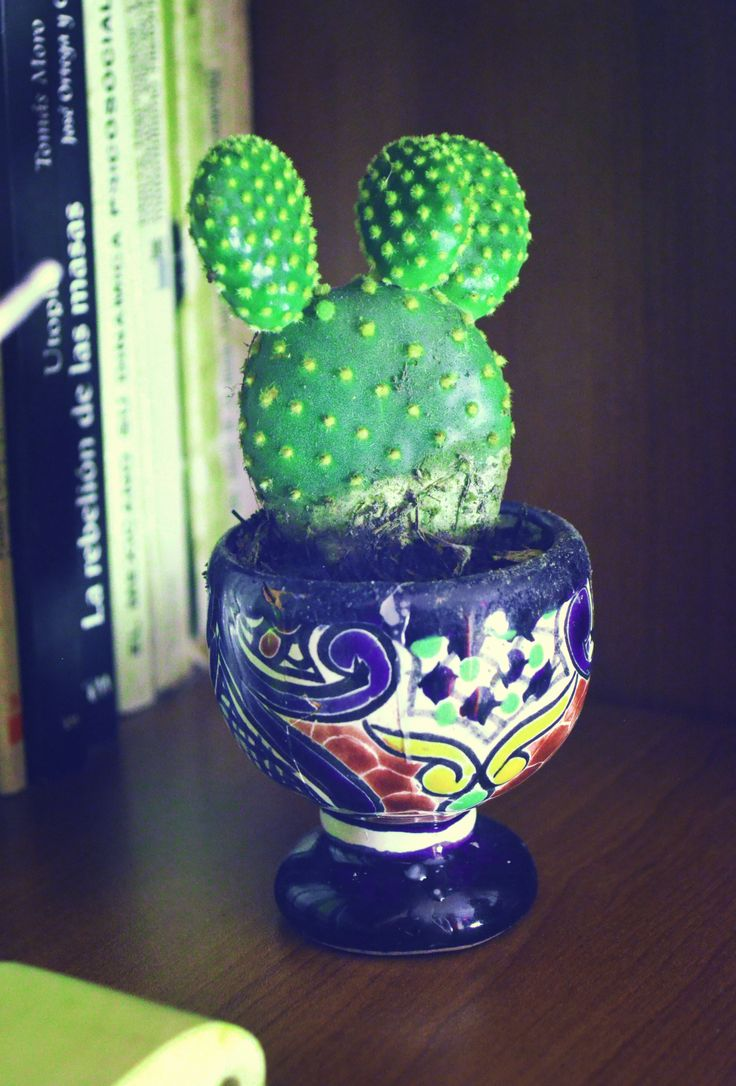 """""""Nopalito""""  The size of this cactus is not more than 12 cms. Perfect to give that """"mexicn style"""" to the room.  #Mexican #EtnoHipster #Room #Cactus"""