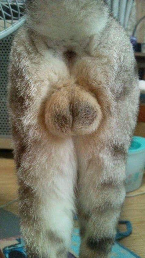 LOL... neuter that cat!
