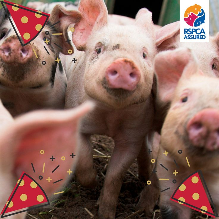 Happy new year from everyone at RSPCA Assured! Let's make 2018 a great year for farm animal welfare!