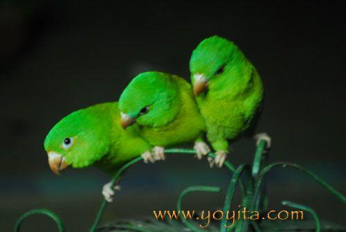Tropical Rainforest Animals and Plants | tropical Forest rainforest jungle pictures of tropical plants rain ...