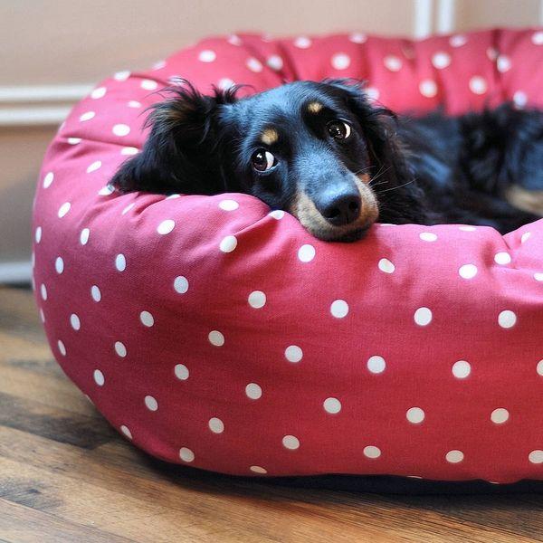 Ausgefallene Hundebett Designs Fur Den Komfort Ihres Geliebten Haustieres Hunde Bett Hundebett Hundekissen