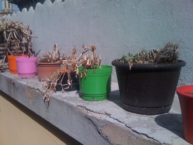 #FFF o #FollowFridayFeltrinelli e la nostra incapacità di curare le piante è inversamente proporzionale a quella di curare libri (sigh!)