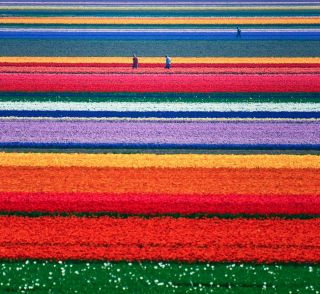 23 Photos That Will Make You Want To Visit Holland - Airows