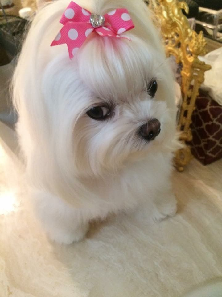 Her Look Tho Pet Accessories Dog Toys Cat Toys Pet Tricks