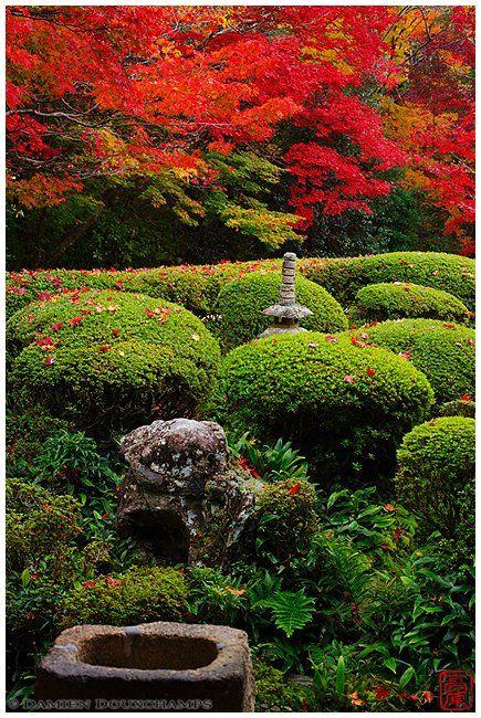 un paseo por algunos jardines japoneses en otoo espacios vivos