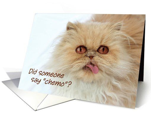 Cute Persian cat, chemotherapy, get well, Did someone say chemo