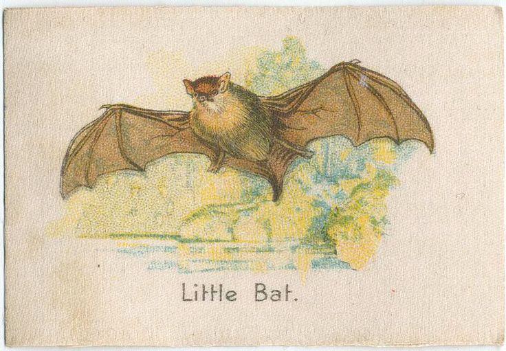 Little Bat <3