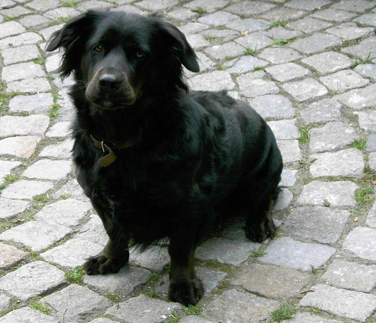 My dog Aja.