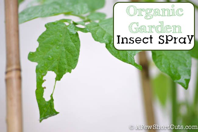 Organic Garden Insect Spray Recipe Gardens Garden Insects And Leaves