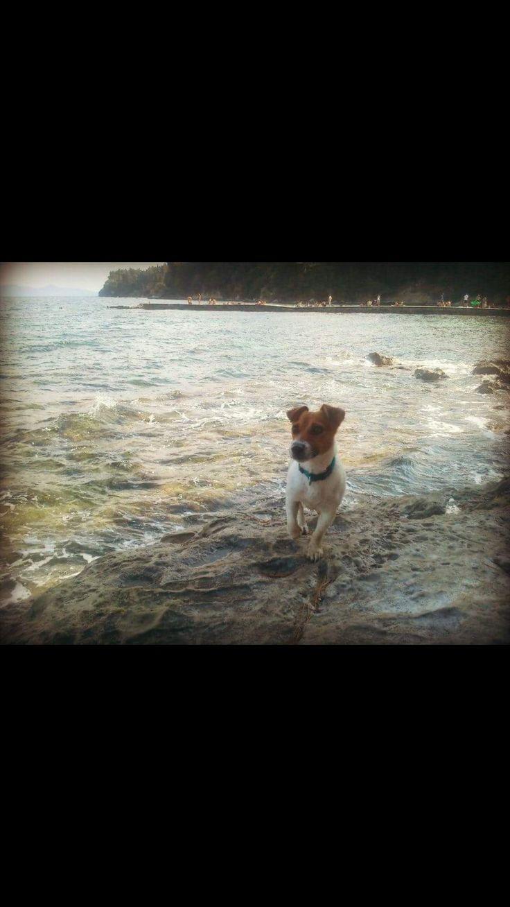 Jack russell carlitos sea