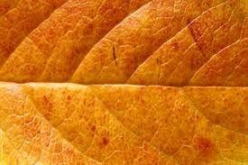 Image result for leaf pattern plastic laminate countertops