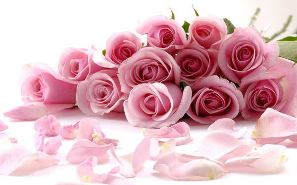 Delicate Beautiful Light Pink Roses Wallpaper