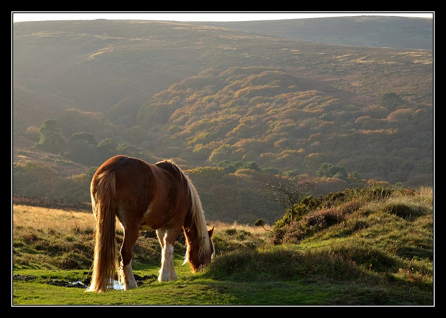 Horse on the hills-Quantock Hills-Somerset, UK.