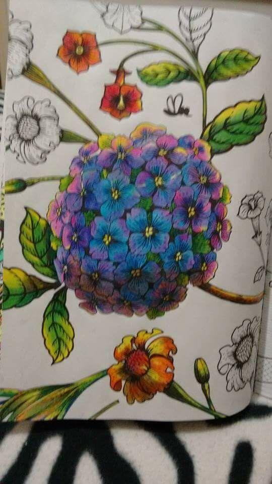 Hortênsia livro de colorir. Coloring book