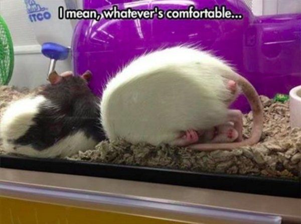 Animals are the driving force behind the internet for a reason – 30 Pics