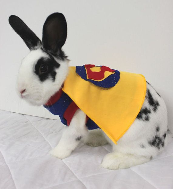 Superman outfit with cape for your bunny. Made to by turvytopsy, $40.00