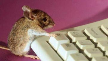 Mejoran memoria en ratones con Alzheimer