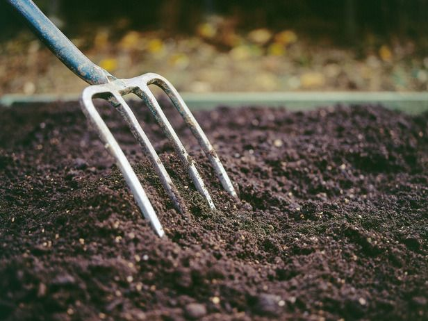 The foundation of a healthy, productive garden is a nutrient-rich, well-draining, crumbly soil. Liberally add organic matter such as finished compost and bagged humus.