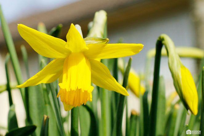 Ingezonden foto: Lente in Drenthe