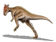 Dracorex hogwartsia. It's a real thing. My life is complete.