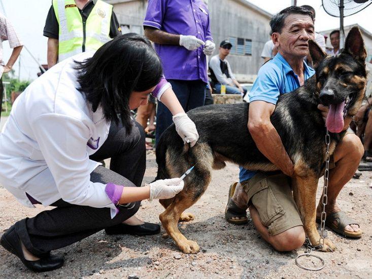 Pemilik Kesal JPV Lewat Maklumkan Punca Kematian Anjing Peliharaan http://ift.tt/2urz1Vq