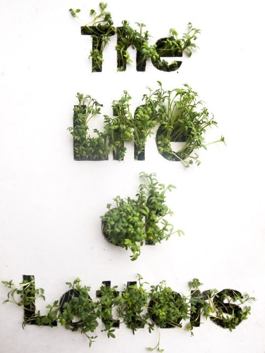 Typography poster. Made by cutting the letters out of cardboard and planting some garden cress seeds underneath it. It literally grew out of the letters.