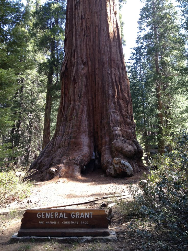 A must see when visiting the Giant Sequoia National Monument! 3rd largest tree in the world!