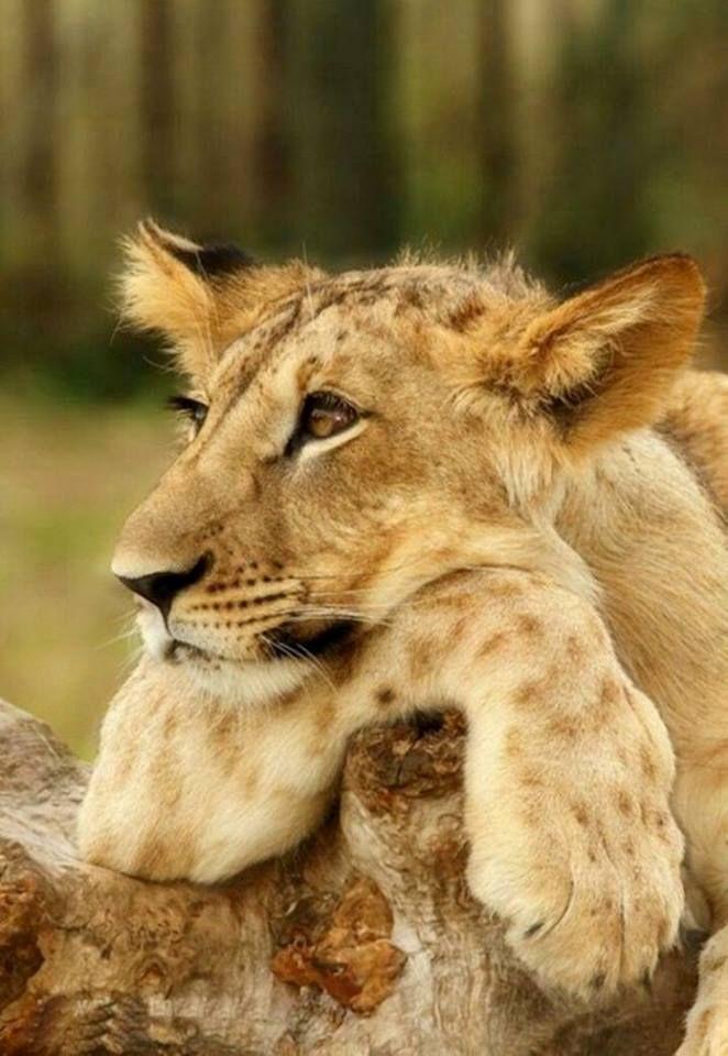 Gosh I am so bored! #BigCatFamily