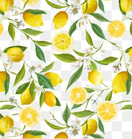 Fresh Lemon Border, Fresh Lemon, Illustration, Lemon PNG
