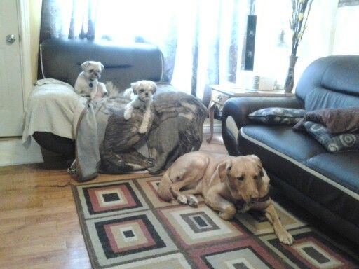 Maya, Molly and Bella