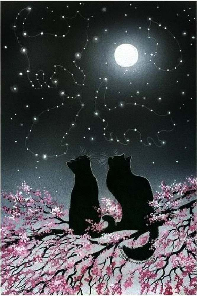 Black cats in the moonlight ~♥~