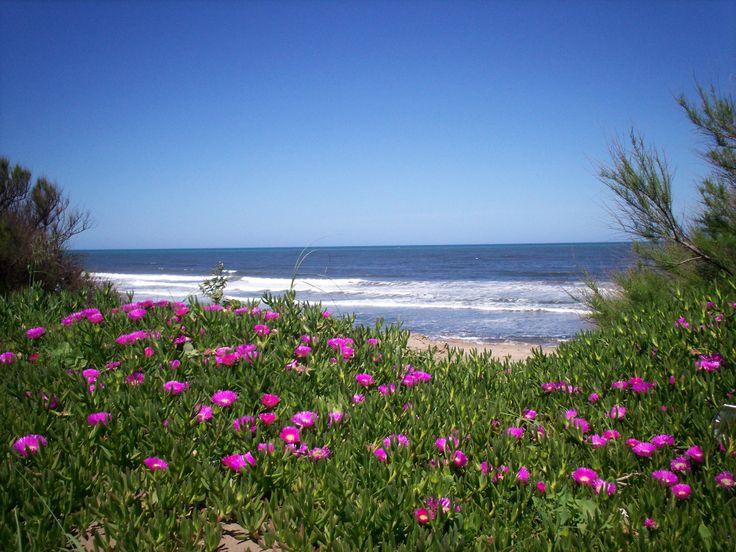 Loberia, a 125 kilómetros de Mar del Plata