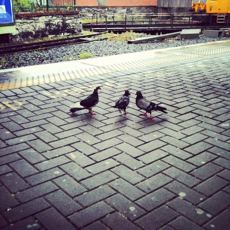 #Pigeons r train-hoppers. By www.crypticvisionphotography.com