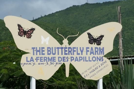 The Butterfly Farm. St. Maarten. Some of the most exotic butterflies I have ever seen reside here.