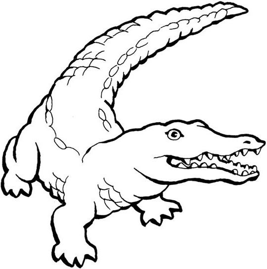 Crocodiles Ready To Pounce Coloring Pages For Kids Printable