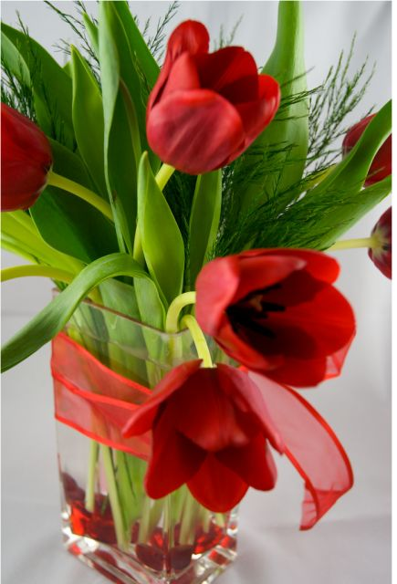 Red Valentine Tulips. TULIPS ARE MY ABSOLUTE FAVORITE FLOWERS~ :) ♥