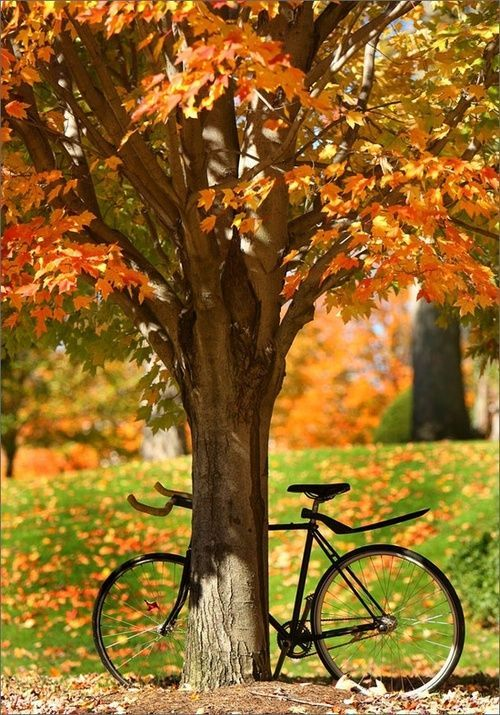 What I love in fall, bike rides.