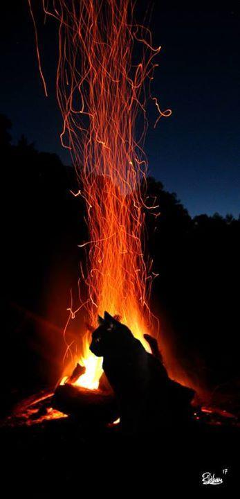 """Good night """"CAT FIRE"""" Art by Raphaël Vavasseur art Fine art prints: http://ift.tt/2kz40qR"""