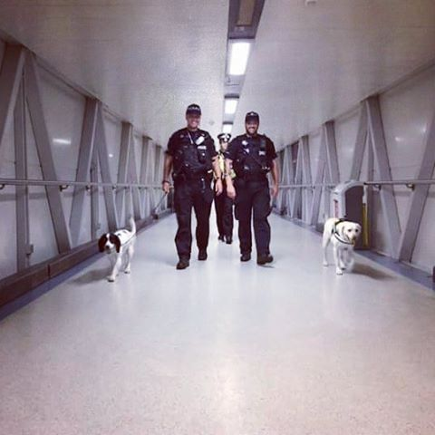 #OnDutyWith #EPDogs with Pc Baldwin and police dog Riley and Pc Mayo and police dog Katy at #Stansted Airport. #essex #essexpolice #proudtoserve #patrol #policedog #PDRiley #PDKaty
