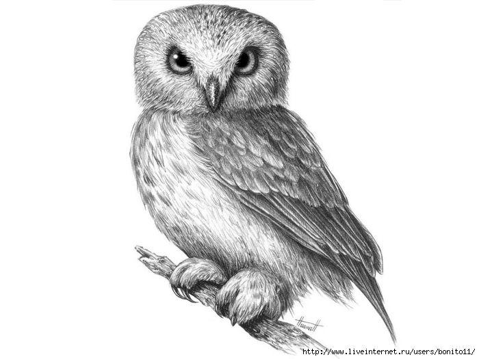 Как нарисовать сову карандашом поэтапно.... Обсуждение на ...