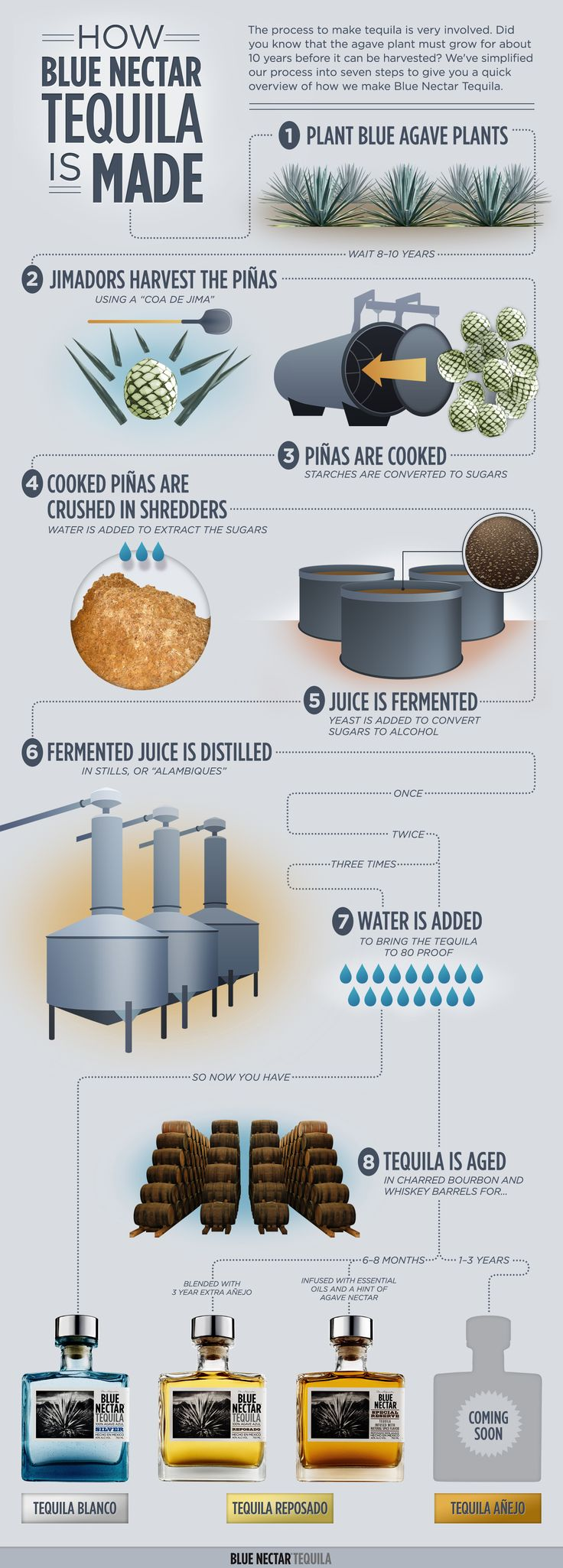 How Tequila is Made #tequila #infographic