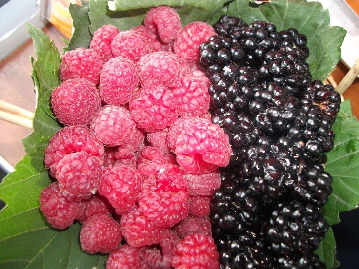 forest fruits yummi