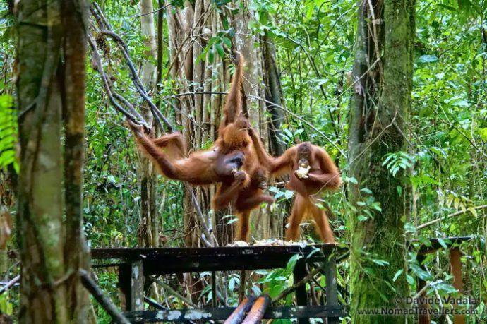 27 Tempat Wisata yang dianjurkan Untuk Dikunjungi di Pulau Kalimantan - Sumber Gambar nomadtravellers.com