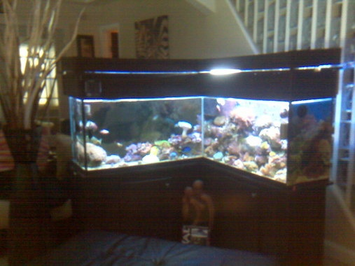 90 gallon aquarium dimensions woodworking projects plans