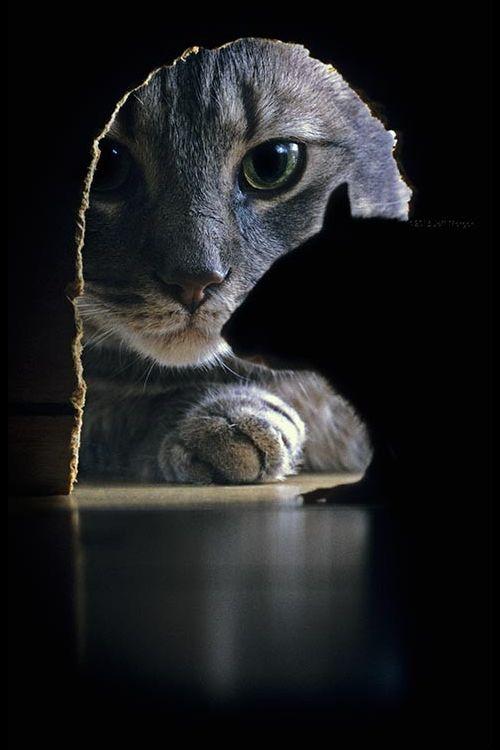 Te tengo a la vista.