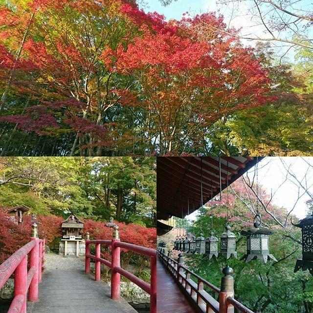 冷えてきましたね。。。研修生に奈良県の談山神社の紅葉を見せてもらいました✨  素敵な雰囲気ですねぇ(*´ω`*)🍁🍁行ってみたい。。 #東亜和裁#東亜和裁紅葉まつり2016 #奈良県#談山神社 #紅葉